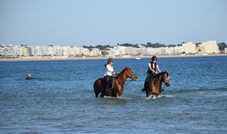 Pension pour chevaux à Angers