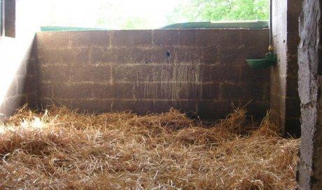 Box chevaux Angers