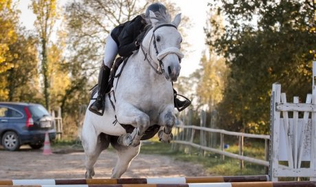 Salle de soins chevaux Angers