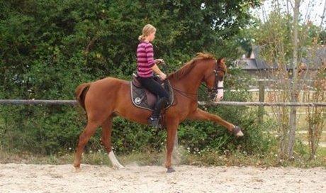 Cours d'équitation mise en confiance Angers